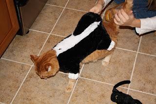 fun arrivals: cat costumes!