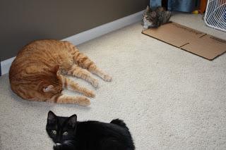 kitten & cat update