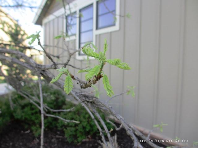 Spring Has Hopefully Sprung