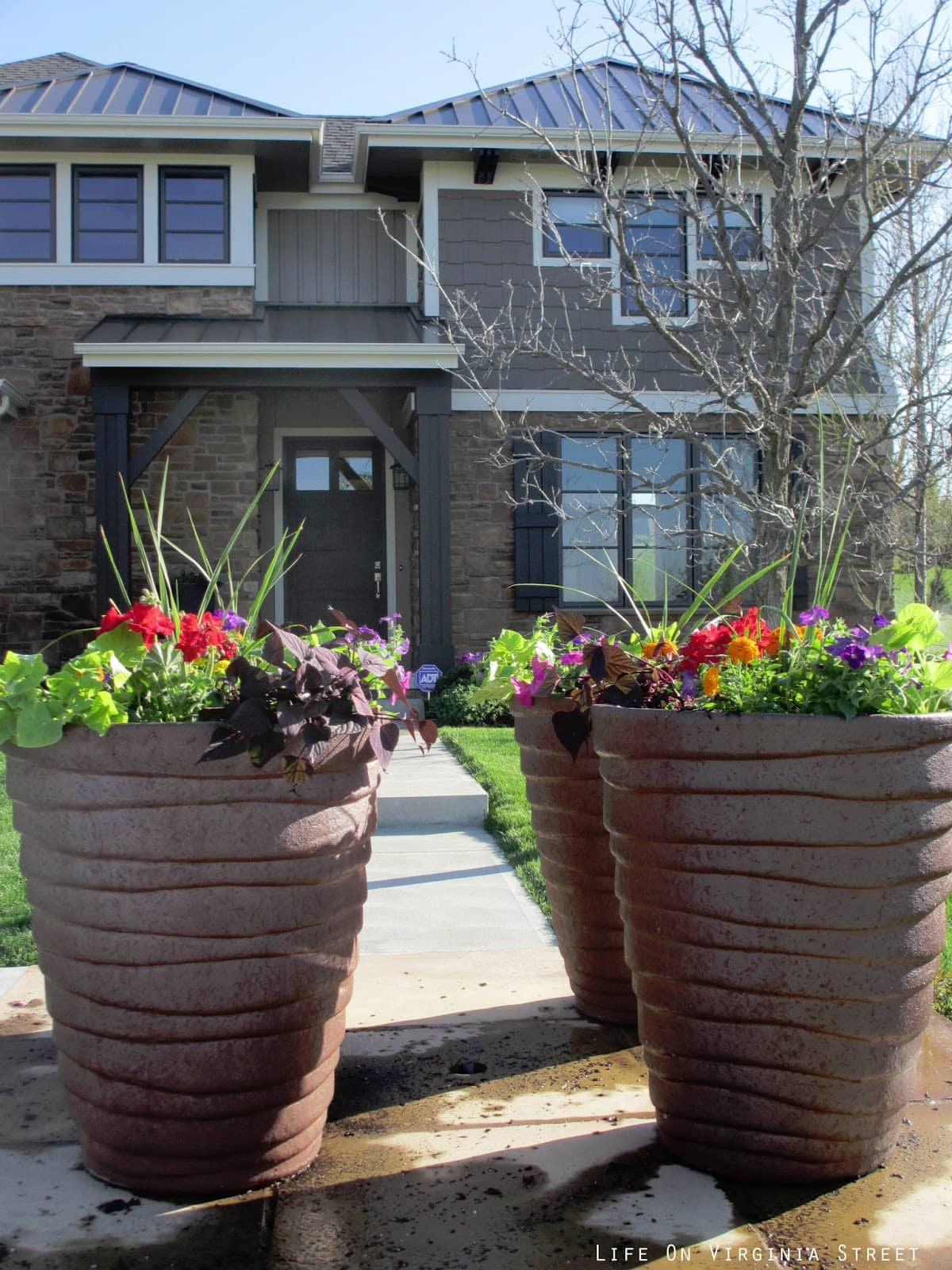 Фото цветов в палисаднике перед домом