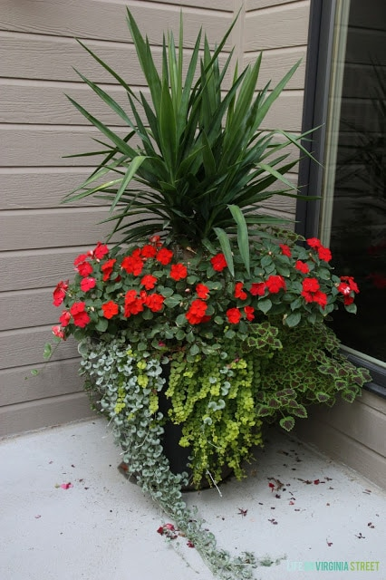 A gorgeous summer planter with yucca, impatiens, coleus and creeping jenny. So many other beautiful container gardening ideas in this post!