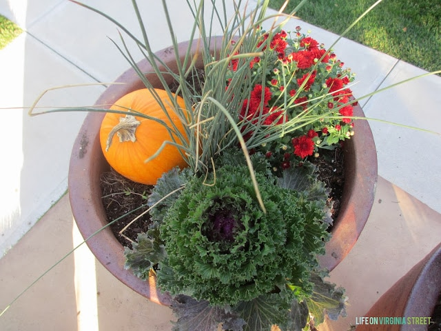 Large planter with kale, red flowers, and a pumpkin.