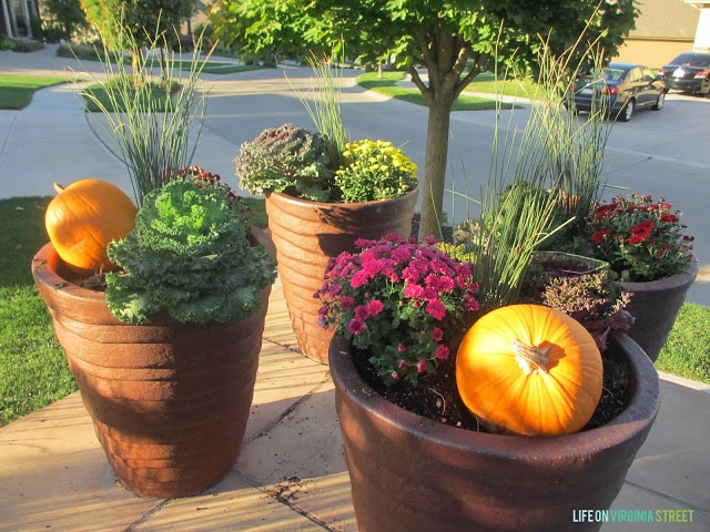 Stunning filled planters on the driveway with pumpkins.