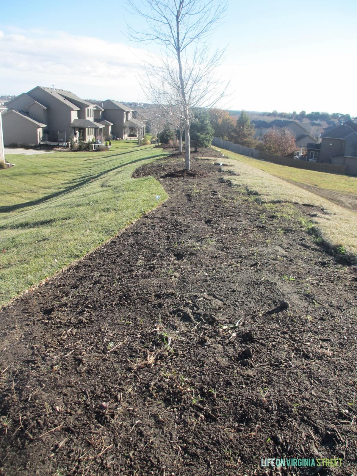 Landscaping Clean Up | Life on Virginia Street