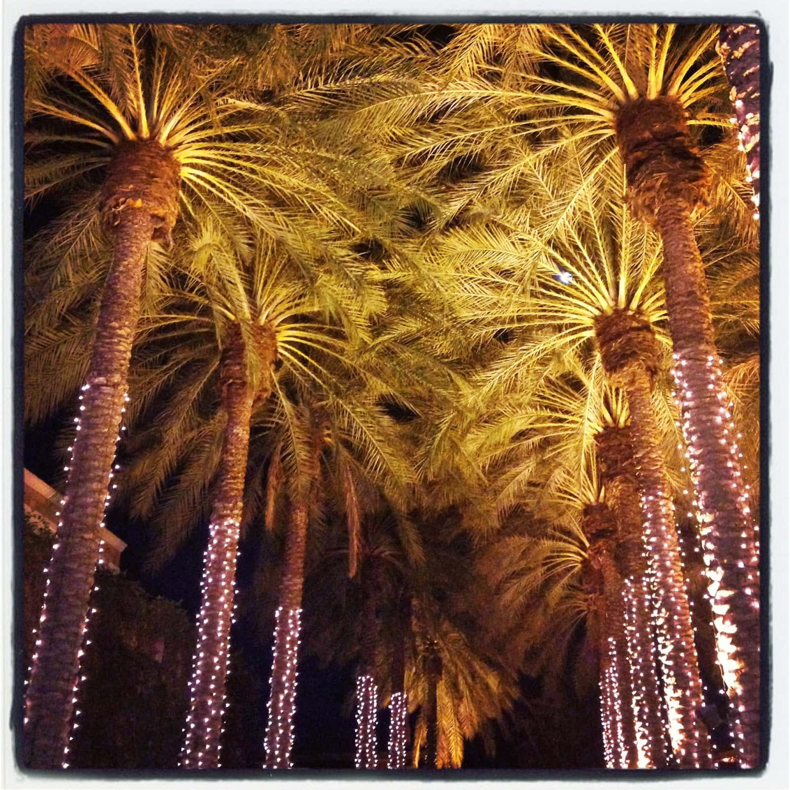 Palm trees with lights on them all in a row.
