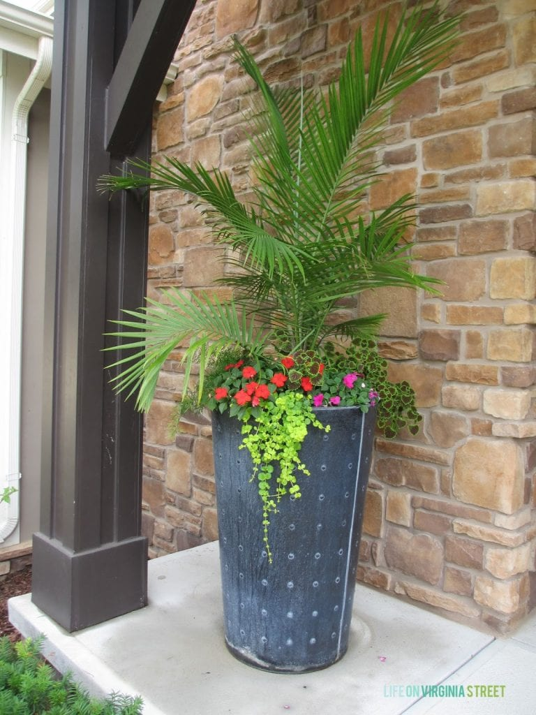 Porch planter with a palm, impatiens, creeping jenny, coleus and asparagus grass. Such beautiful summer container garden ideas in this post!