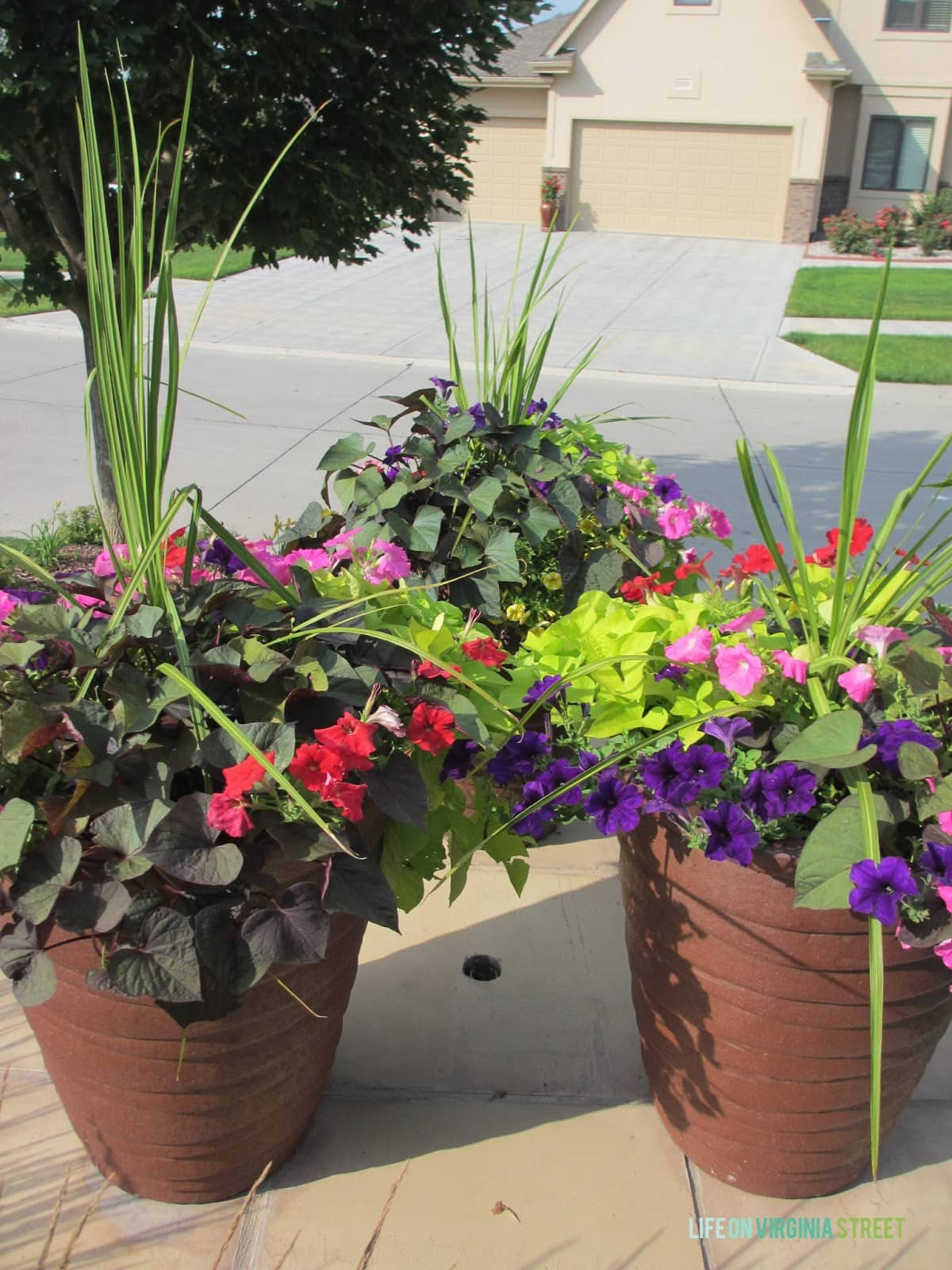 Some Hydrangea Love and Random Landscaping Thoughts - Life On Virginia Street