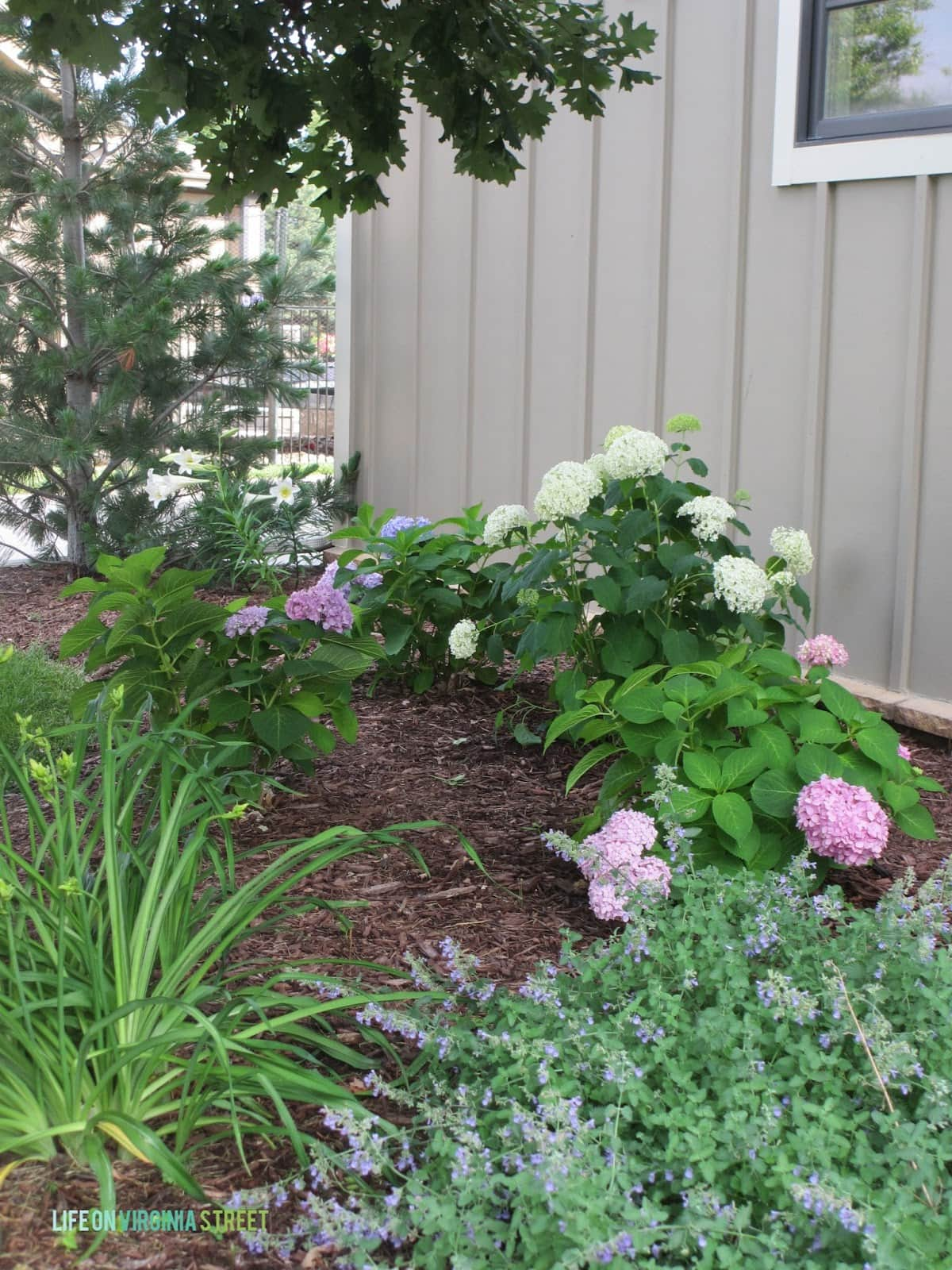 Planting Hydrangeas Other Landscaping Ideas