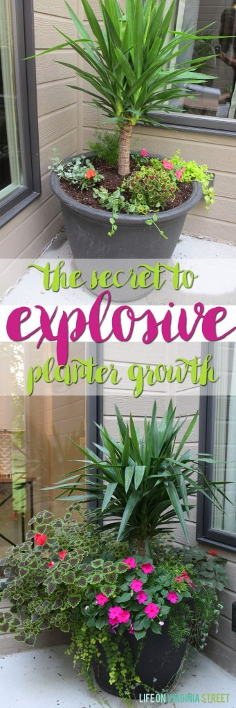 The secret to explosive planter growth and the best fertilizer for container plants!