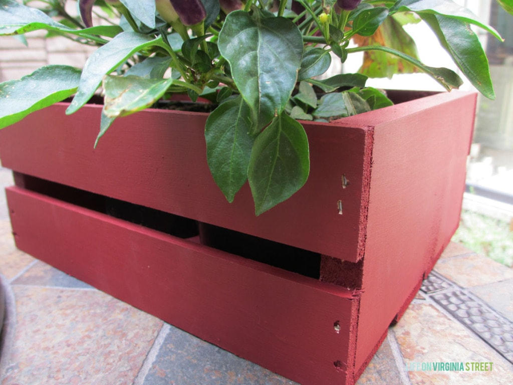 "The wooden crate painted in ""sangria"" color with a plant in it."