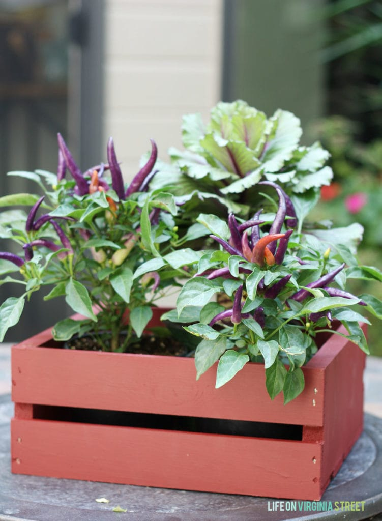 Green and purple plants in painted wooden crate.