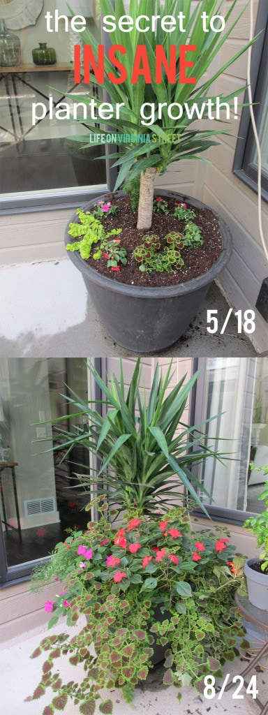 The secret to insane planter growth - gorgeous results using this best fertilizer for plants. These container planters are stunning!