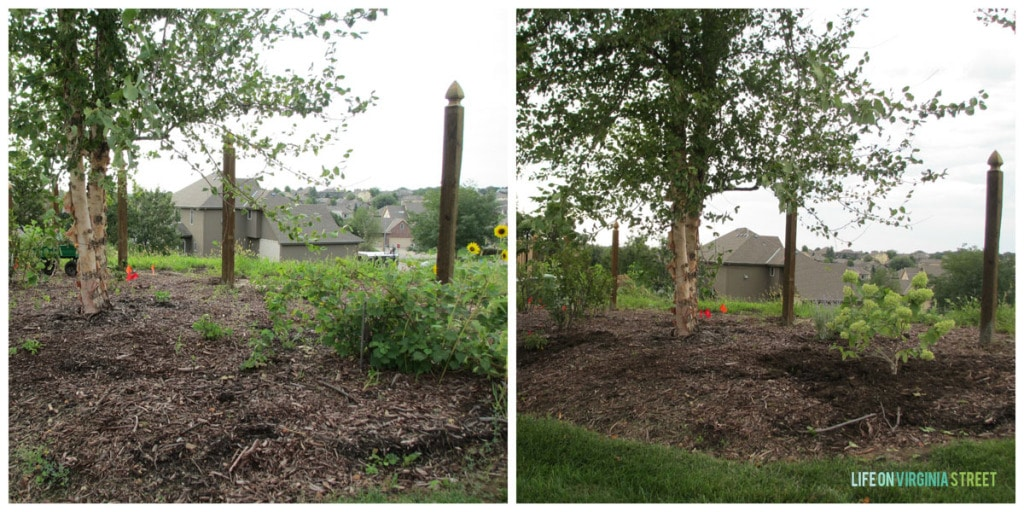backyard before and after 2