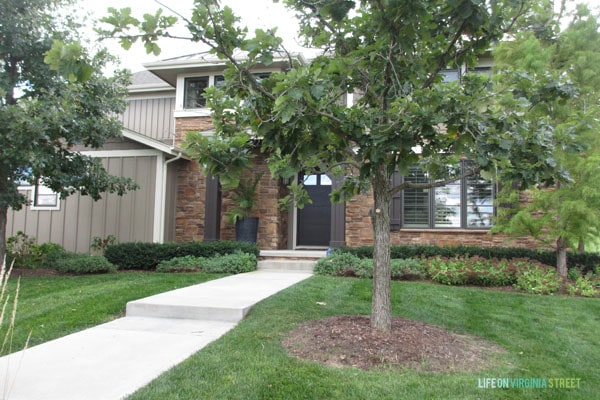 front yard oak tree