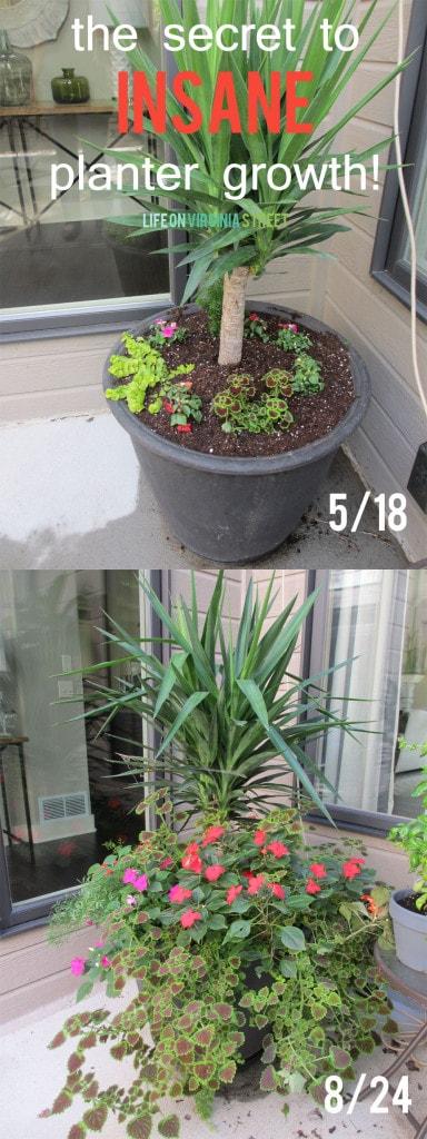 the secret to insane planter growth