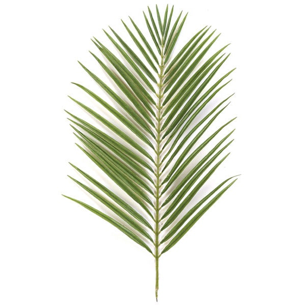 A large green palm lying on a white surface.