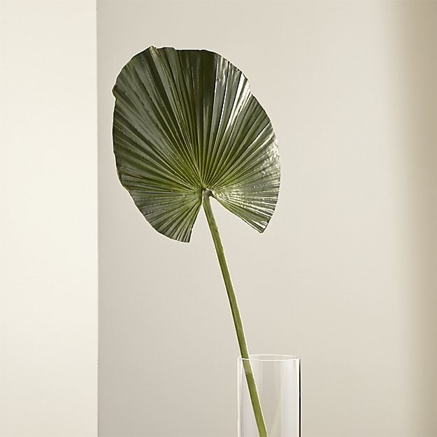 A fan type of palm single stem in a vase.