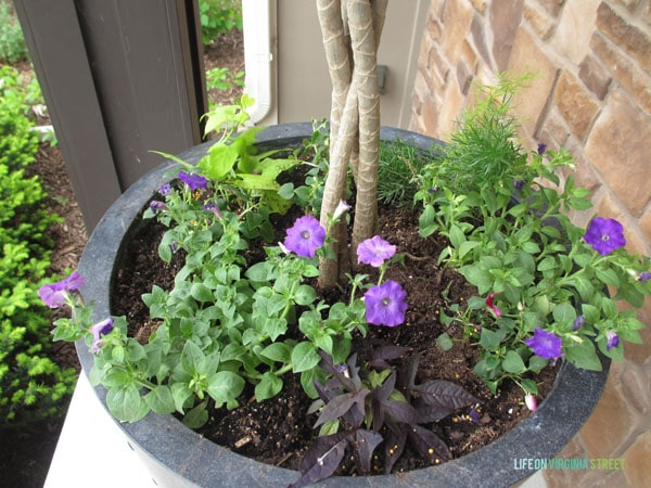 Front Porch Planter Spring 2015 - Life On Virginia Street