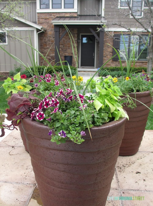 Creating Curb Appeal with Colorful Plants