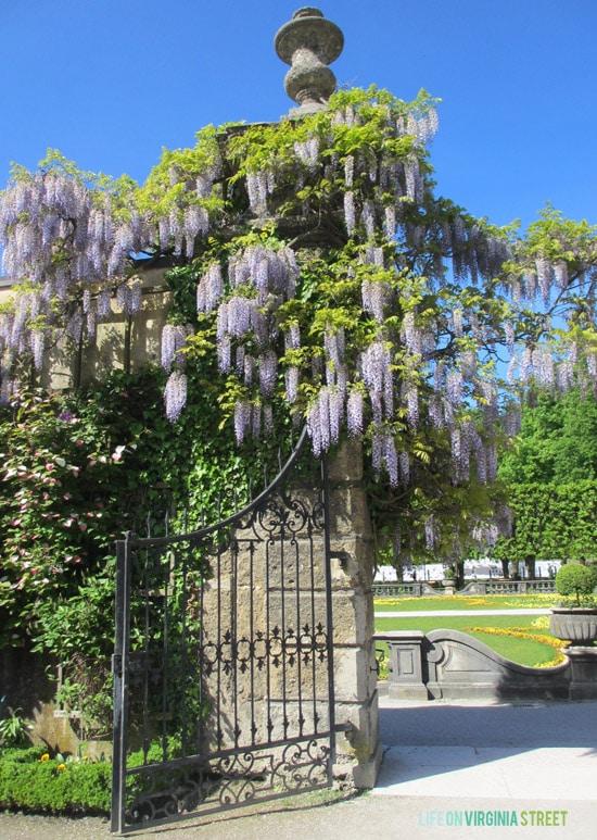 Austria - Gardens in Salzburg - Life On Virginia Street