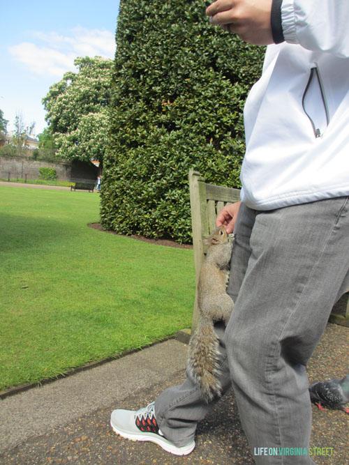 London - Kensington Palace Squirrel - Life On Virginia Street