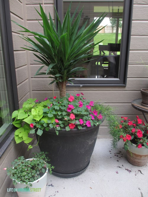 Planters - Courtyard - Life On Virginia Street