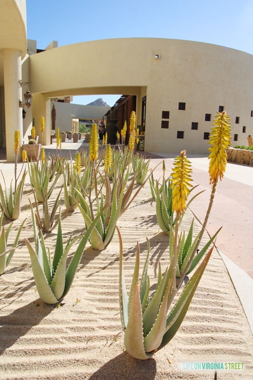Resort at Pedregal grounds - Life on Virginia Street