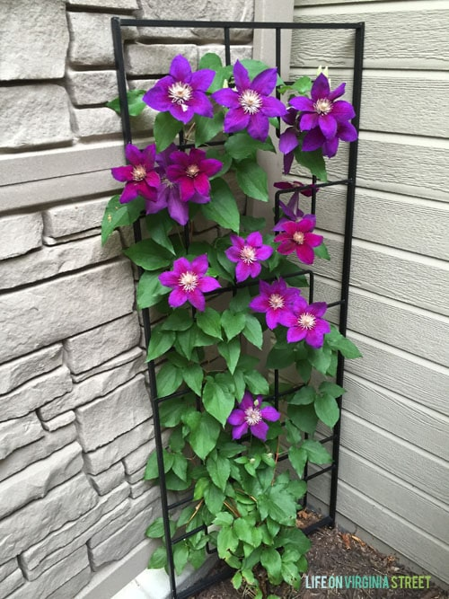 Summer Home Tour - Clematis - Life On Virginia Street