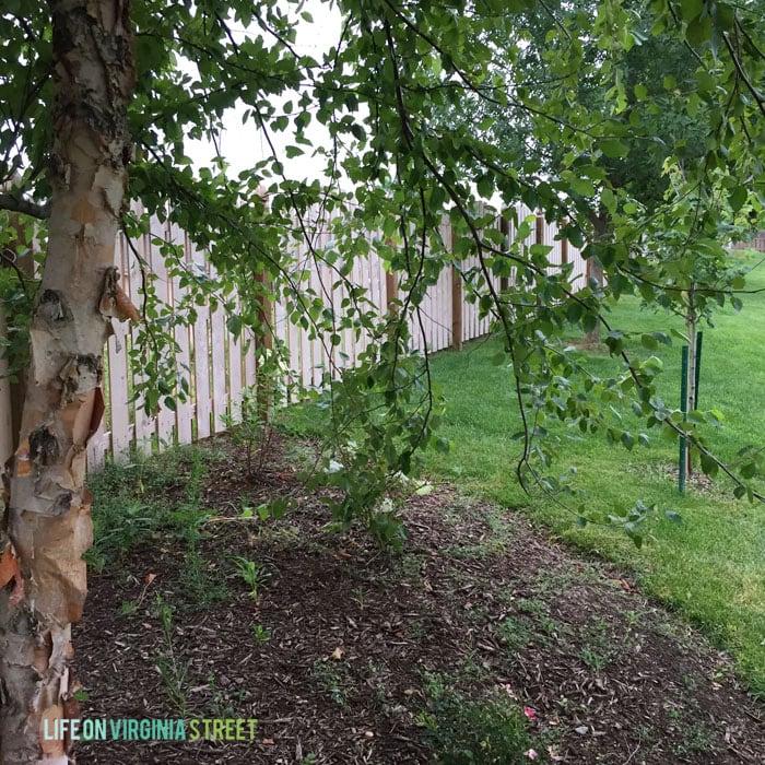 Mid Summer Landscape Maintenance Life On Virginia Street