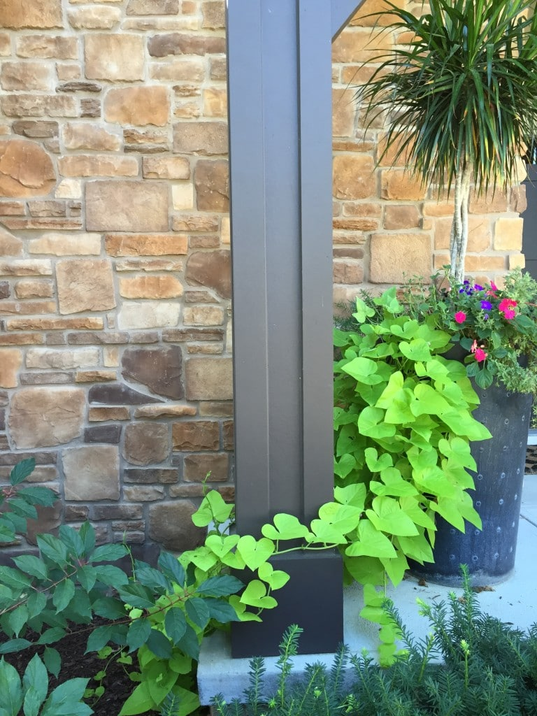 Summer planter and advice for the best fertilizer.