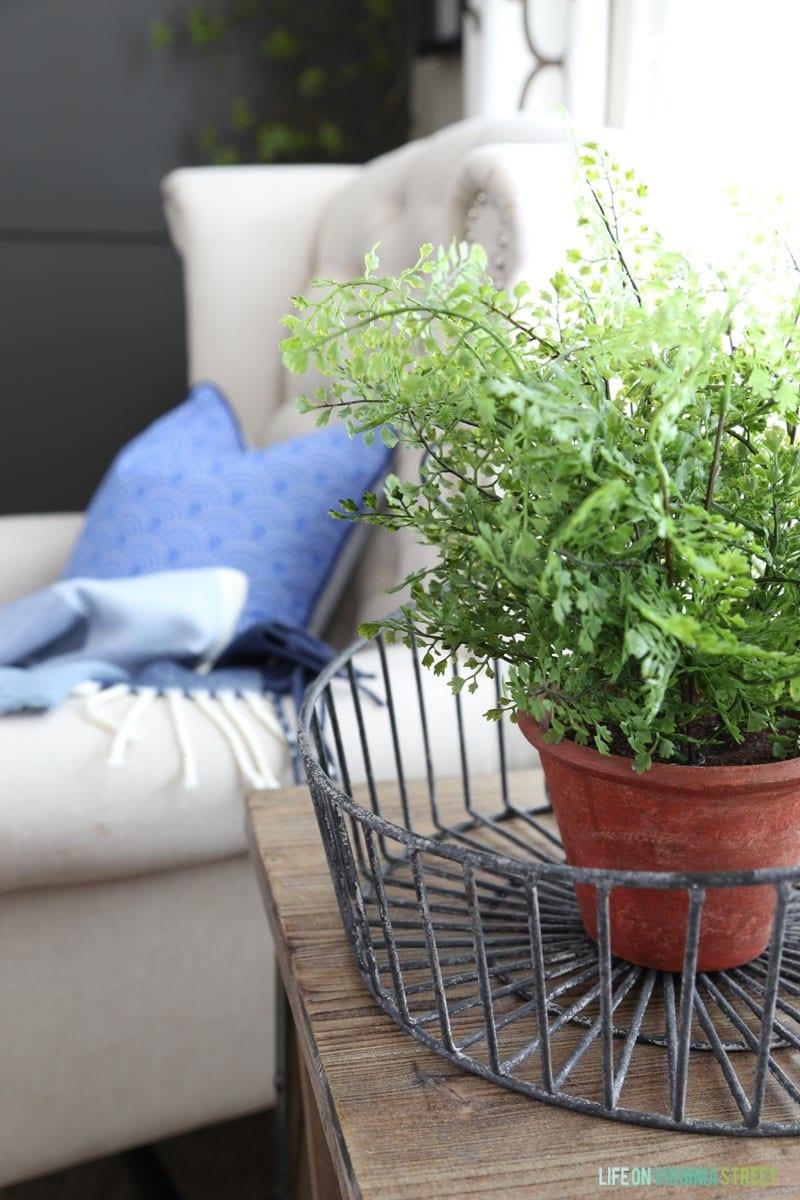 office greenery. Office Greenery \u2013 Life On Virginia Street