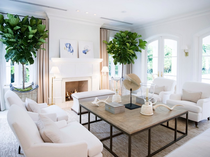 Two large fig leaf trees flanking a white fireplace.