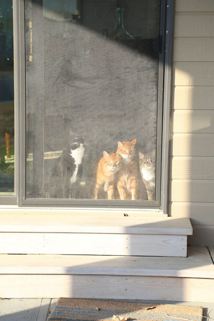 Cats Waiting to Go Outside