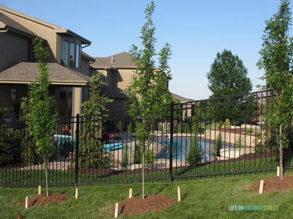 Backyard Columnar Oak - Life On Virginia Street