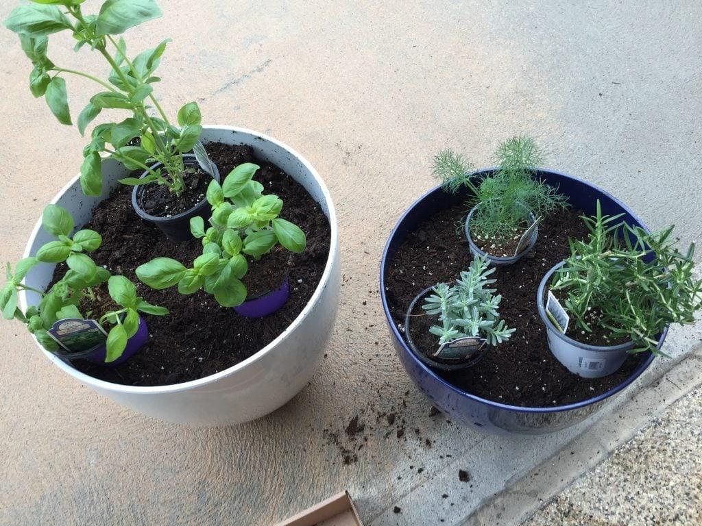 Herb Garden Placement