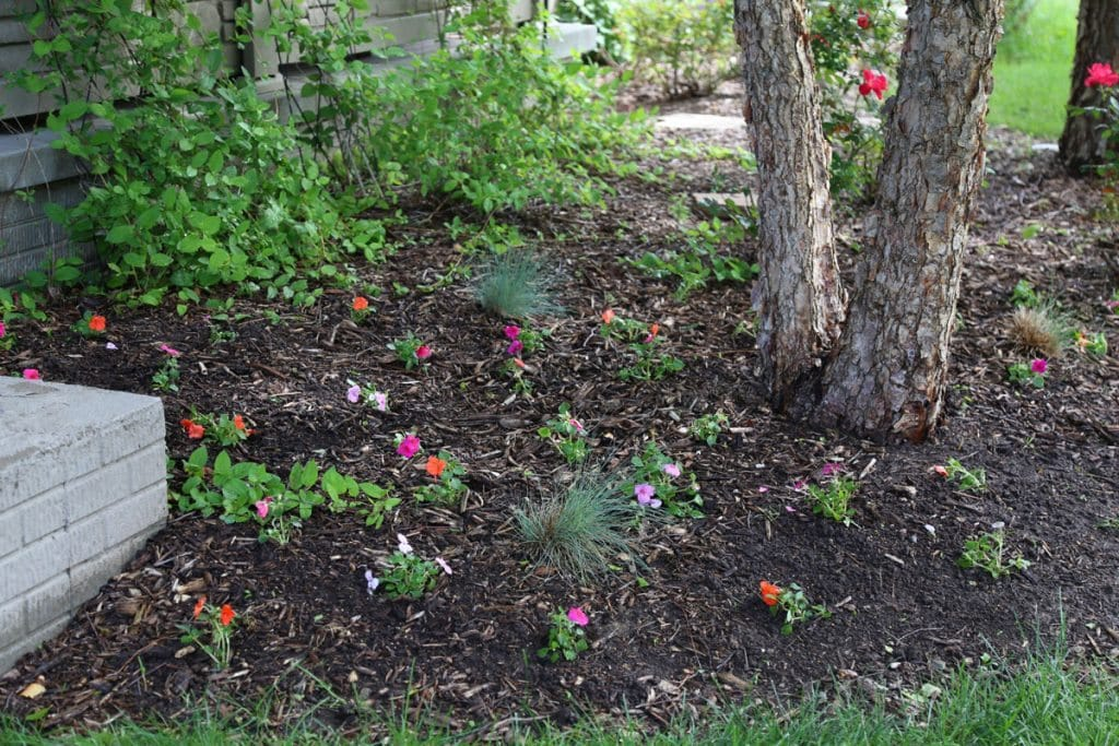 Impatiens on the West Side 2016