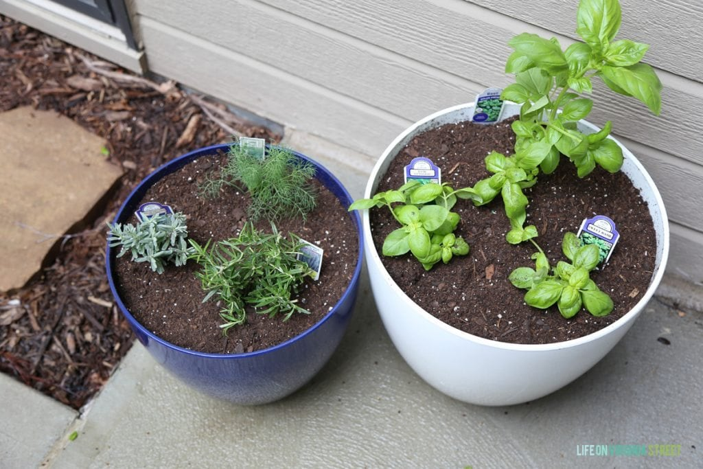 Outdoor Potted Herb Garden