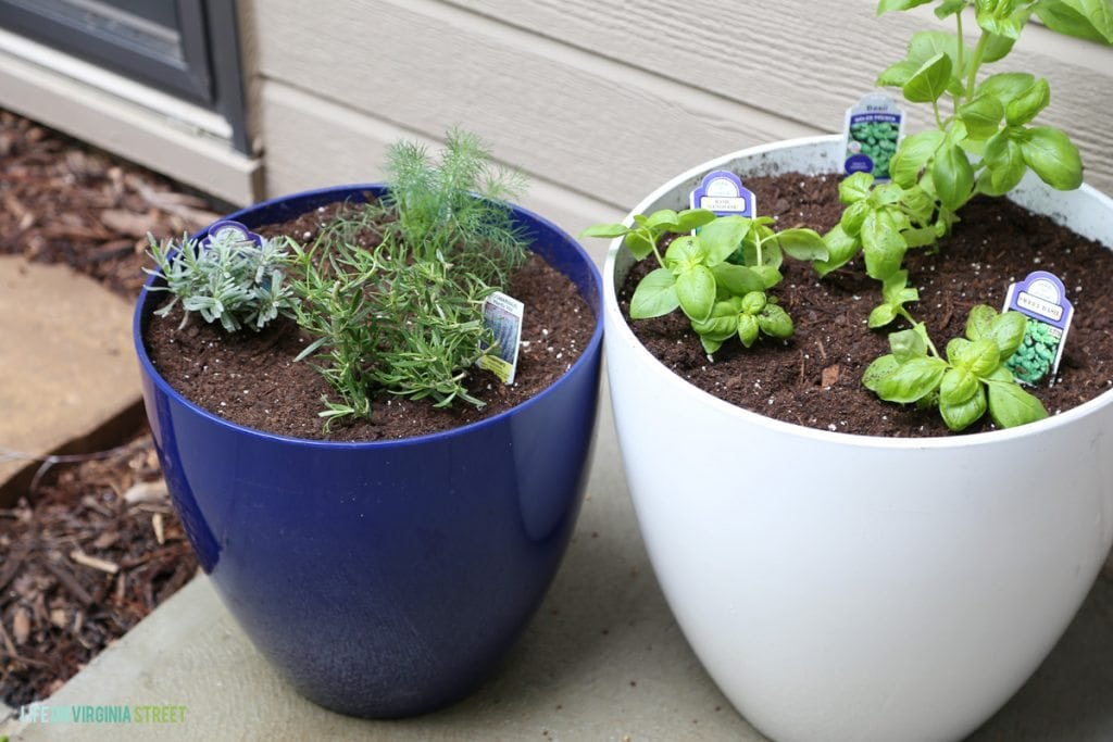 How To Make A Potted Herb Garden