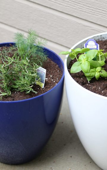 How to Make A Potted Herb Garden (And Why We'll Always Have One)