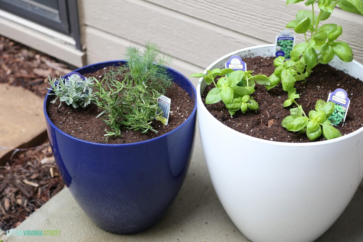DIY Cat Herb Garden - Life On Virginia Street