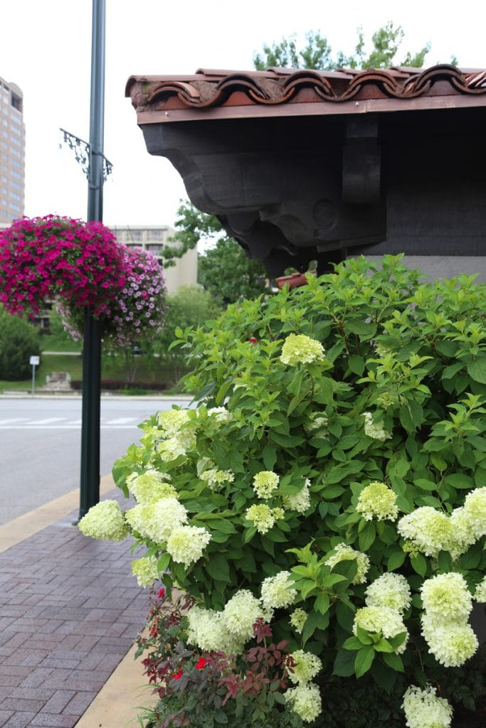 Flowers at Country Club Plaza via Life On Virginia Street