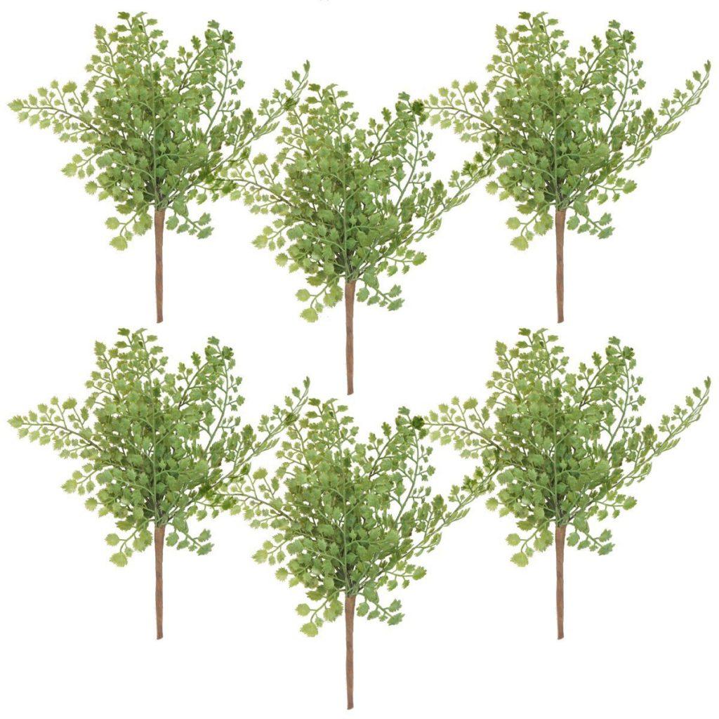 Maidenhair Ferns