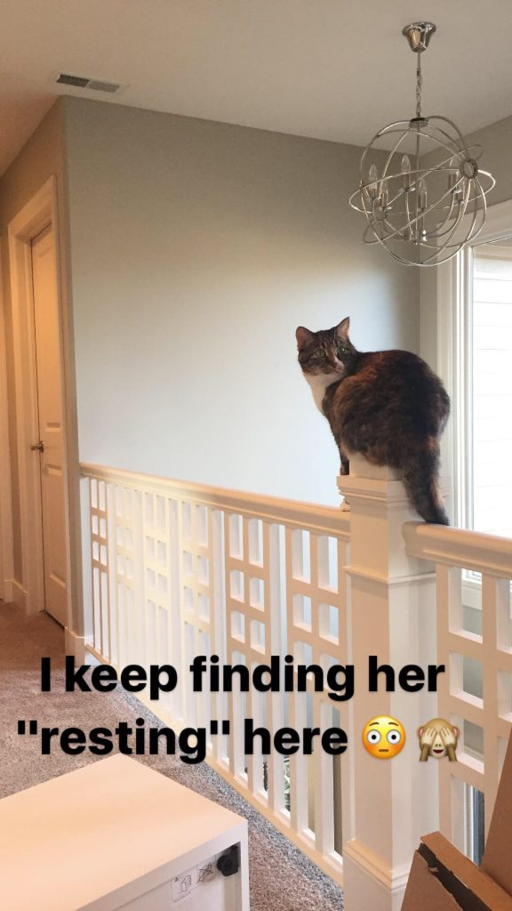 Our cat loves sitting atop the banister in our upstairs front hallway.