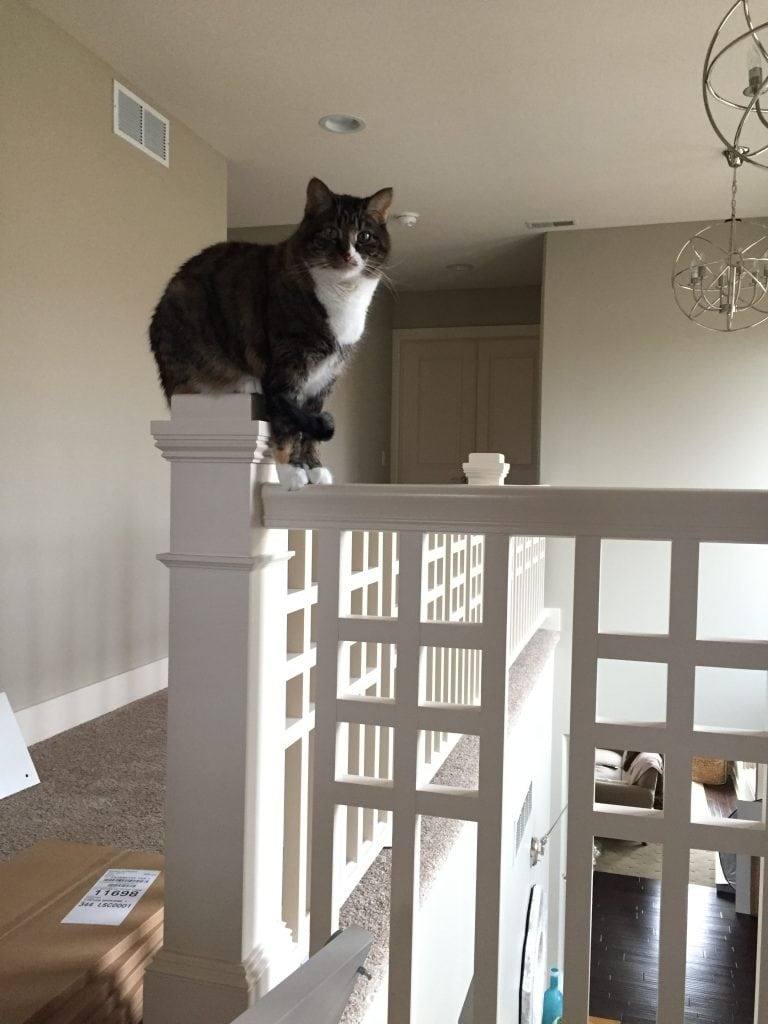 This corner post of our upstairs banister is this cat's favorite spot to sit.