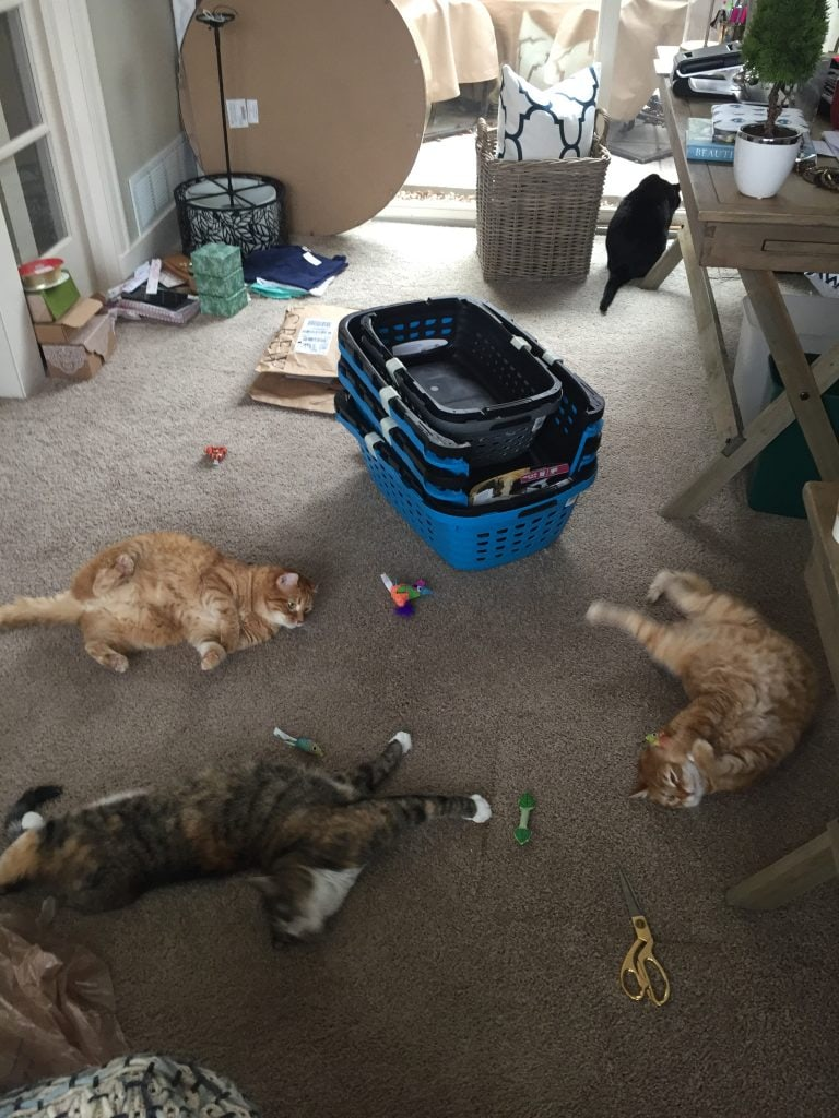 The cats were obviously enjoying themselves in the chaos of our office!