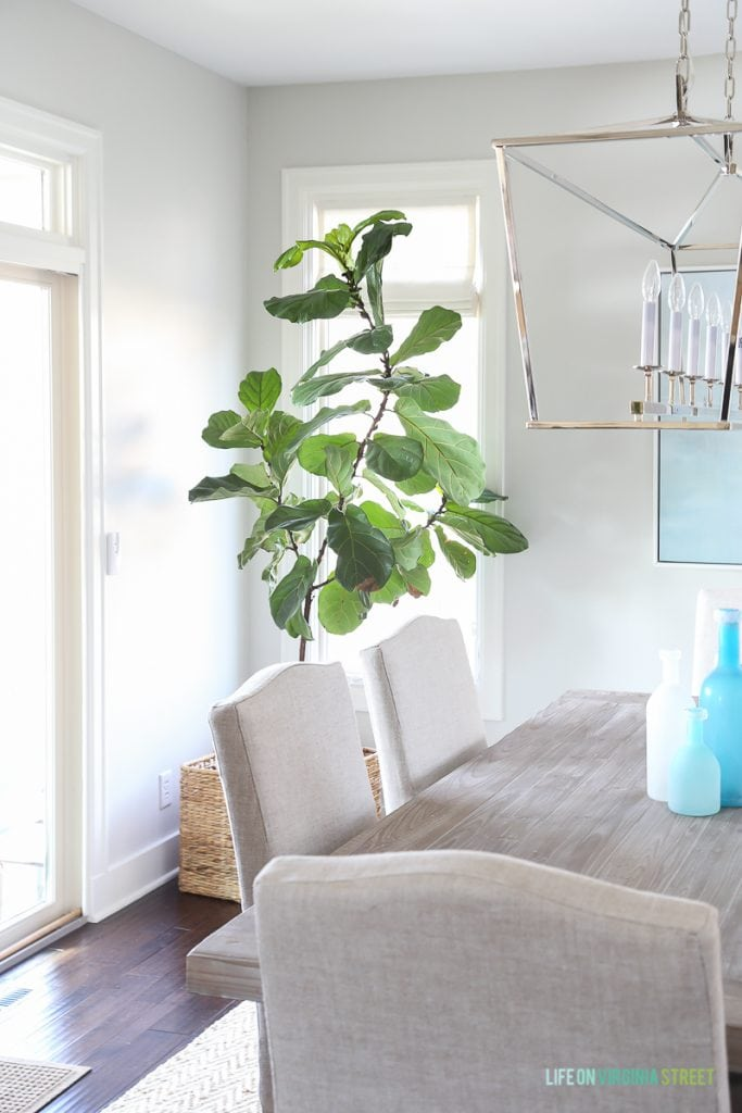 Coastal dining room with natural wood table, linen chairs, fiddle leaf fig tree, Darlana linear pendant and blue ocean art. Love the simple linen roman shades!