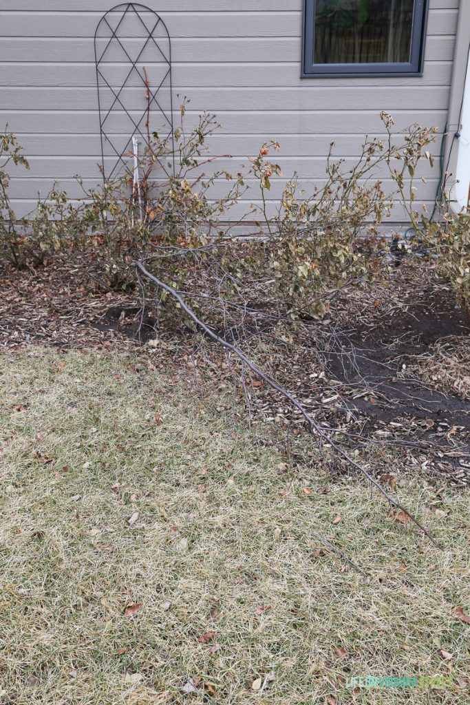 winter home maintenance checklist - outdoor landscaping
