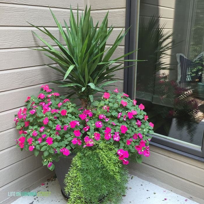 Preparing Planters for Summer - Love this colorful planter full of impatiens and yucca!