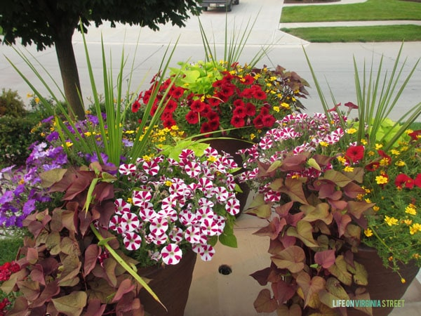 Planters in the front yard filled with yellow, red, and purple flowers and lots of greenery.