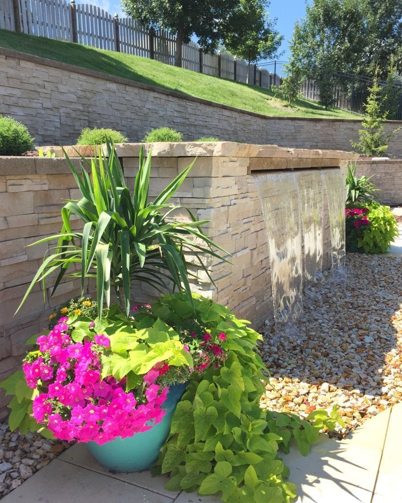 Gorgeous planter near a pool and waterfall, featuring yucca plants, pink petunias, and potato vines. Pretty inspiration for planters for summer.